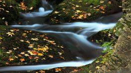 autumn-2857_960_720