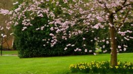 spring-tree - arbre printemps